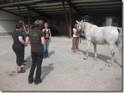 18.08.2013 Horsespiritfestival 004